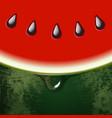 fresh watermelon half slice peel skin texture vector image