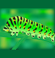 green caterpillar sitting on a branch vector image
