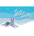 hello winter poster with spotted grey dog collar vector image vector image