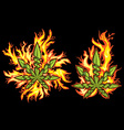 Marijuana cannabis leaf fire flames background vector image vector image