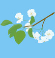blossoming apple tree spring twig on blue vector image