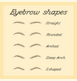 eyebrow shapes various types eyebrows vector image vector image