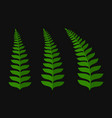 green fern leaf set vector image vector image