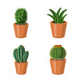 isolated object of cactus and pot logo collection vector image
