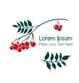 Rowan branch with berries vector image vector image