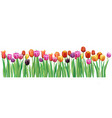 border with multicolor tulips vector image