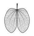 leaf black contour on white background vector image vector image