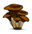 mushrooms edible mushrooming poster vector image vector image