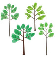 set of trees with green leaves trees in summer vector image