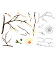 plum blossom flower outline vector image
