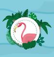 flamenco exotic bird vector image