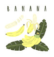 hand drawn cartoon set of whole sliced banana vector image