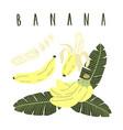 hand drawn cartoon set whole sliced banana vector image