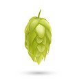 hop plant 3d icon isolated on white vector image vector image