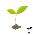 Little plant sprout vector image