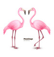 realistic 3d pink flamingo set vector image vector image