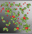 set of holly berry leaves christmas decoration vector image