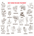 collection of herbs for acne treatment vector image vector image