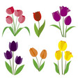colored tulips vector image vector image
