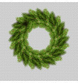 pine tree fir spruce branch evergreen pine tree vector image