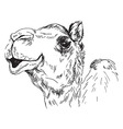 Hand sketch of the head of a camel vector image vector image