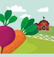 farm fresh vegetables harvest vector image vector image