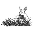 Hand sketch rabbit and Easter eggs vector image vector image