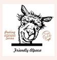 peeking funny alpaca - surprised alpaca vector image vector image