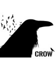 Graphic black and white crow isolated on white
