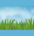 grass in droplets water background a nature vector image vector image