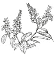 Hand Drawn Bird Cherry Tree Sketch vector image vector image