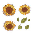 isolated handdrawn sunflowers and leaves vector image