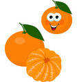 mandarines tangerine clementine with leaves vector image vector image