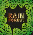 rain forest vector image