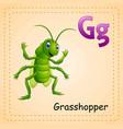 animals alphabet g is for grasshopper vector image