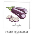hand drawn of isolated eggplant vector image