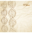 Old paper with dna vector image vector image