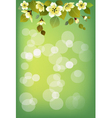 Summer holidays background Sakura vector image
