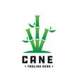 bamboo and cane green logo vector image vector image