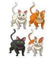 Yong cats in four colours vector image
