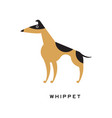 black and brown whippet character isolated on vector image