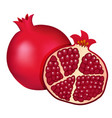 burgundy red pomegranate and half of pomegranate vector image vector image
