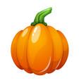 cartoon pumpkin on white vector image