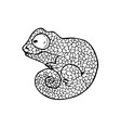 chameleon zen2 vector image