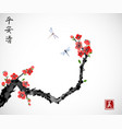 cherry sakura tree branch in blossom and two vector image vector image