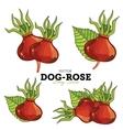 Dog-Rose Set vector image vector image