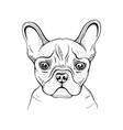 cute bulldogdog t-shirt print design cool animal vector image