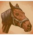 engraving horse head retro vector image vector image