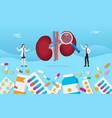 human two kidney medicine health pills drug vector image vector image