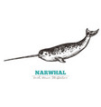 hand drawn narwhal vector image vector image